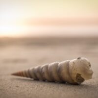 fimab_graphics-seashell-1